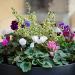 Flowers: Tips For Those Potted Plants To Last Longer